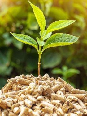inega biomasa